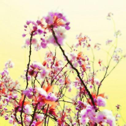 Blütenrausch-10.jpg