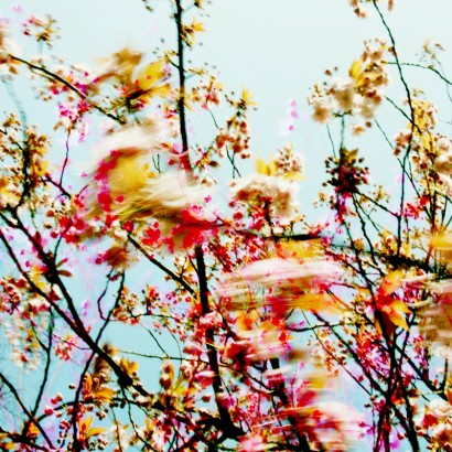 Blütenrausch-15.jpg
