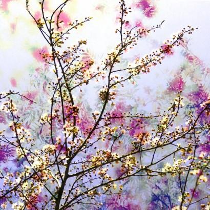 Blütenrausch-17.jpg