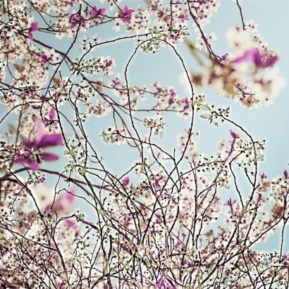 Blütenrausch-2b.jpg