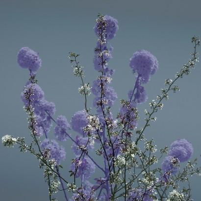 Blütenrausch-42.jpg