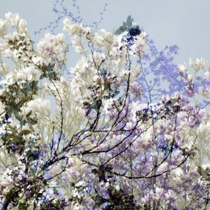 Blütenrausch-63.jpg