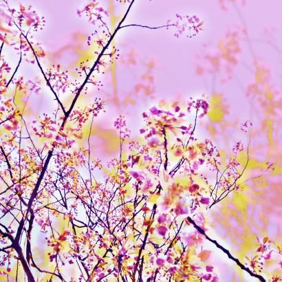 Blütenrausch-9.jpg