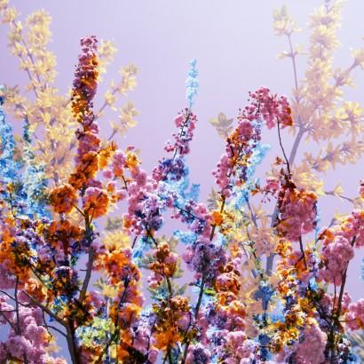 Blütenrausch-62.jpg